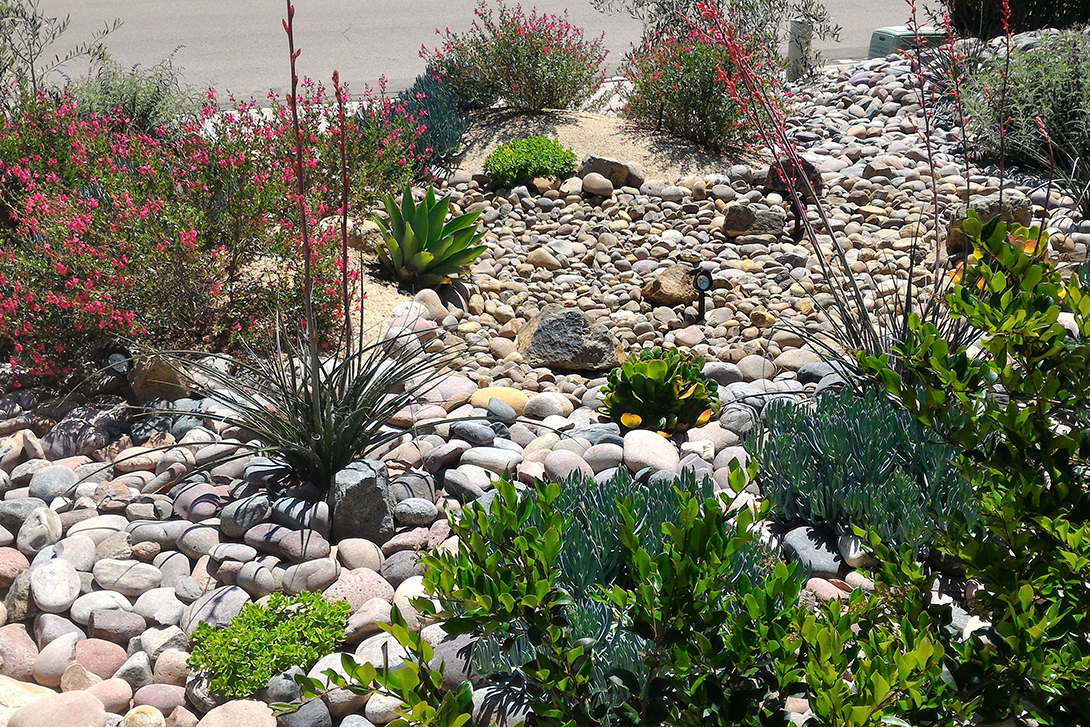 way to conserve water - drought tolerant landscape